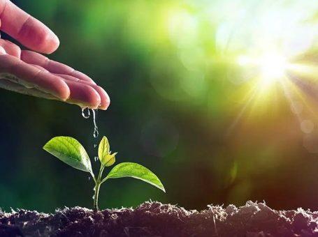 UPL Agromed Tarım İlaçları ve Tohumculuk